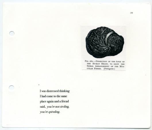 Snail 42